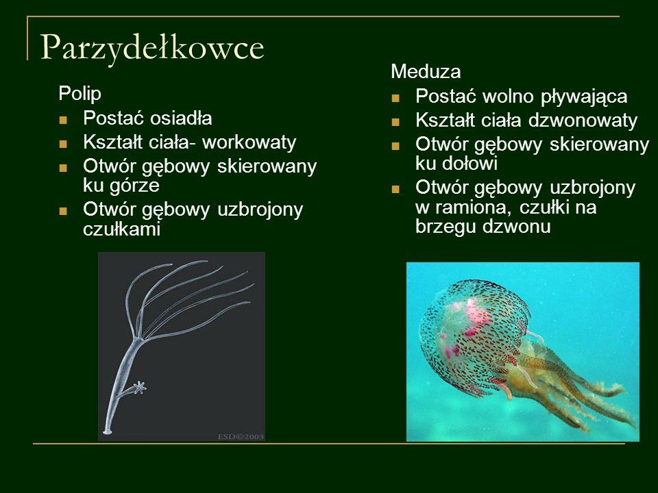 Parzydełkowce Meduza Postać wolno pływająca Polip