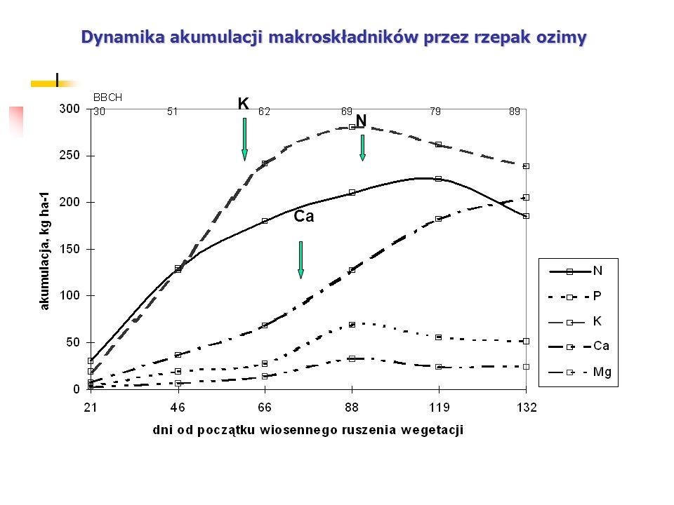 Dynamika akumulacji makroskładników przez rzepak ozimy
