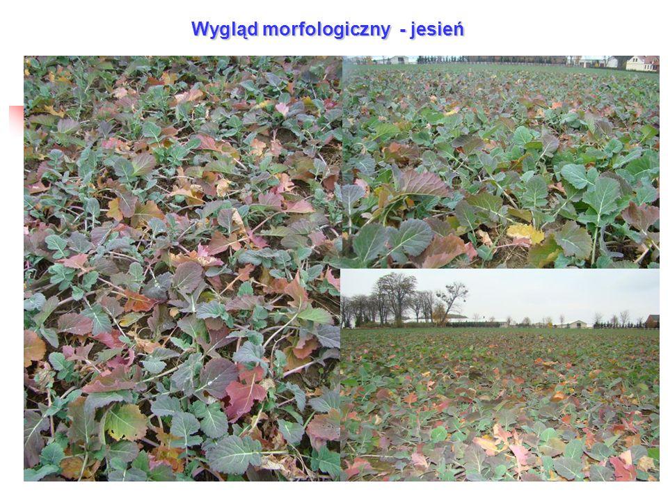 Wygląd morfologiczny - jesień
