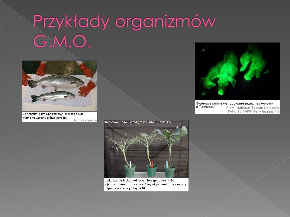 Przykłady organizmów G.M.O.