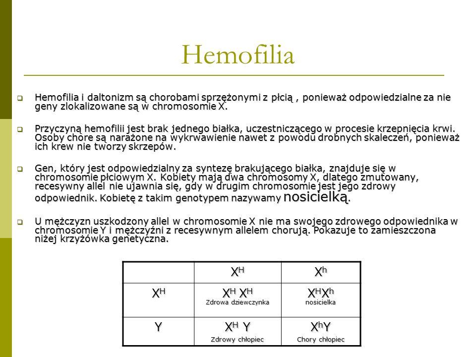 Hemofilia XH Xh XH XH XHXh Y XH Y XhY