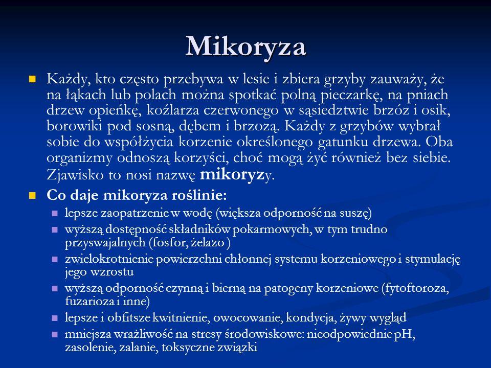 Mikoryza