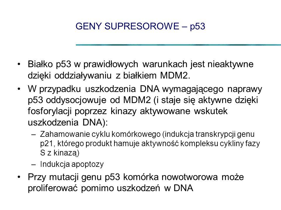 GENY SUPRESOROWE – p53 Białko p53 w prawidłowych warunkach jest nieaktywne dzięki oddziaływaniu z białkiem MDM2.