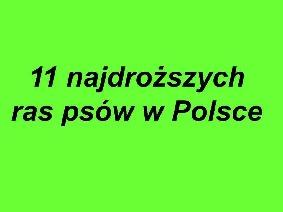 11 najdroższych ras psów w Polsce