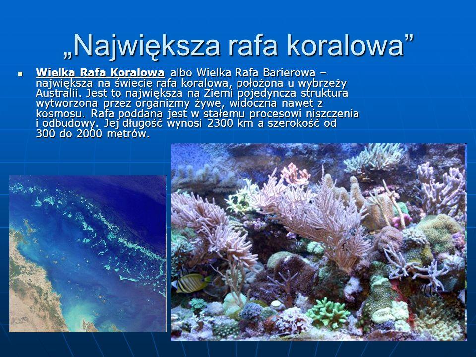"""""""Największa rafa koralowa"""
