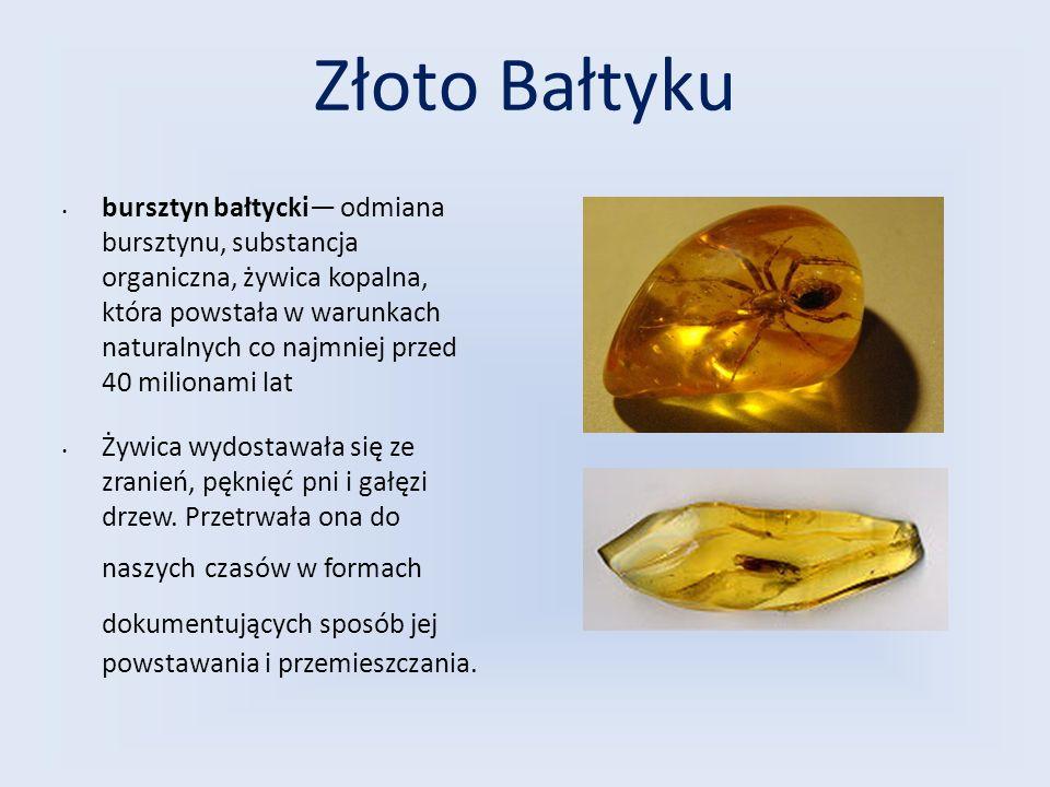 Złoto Bałtyku