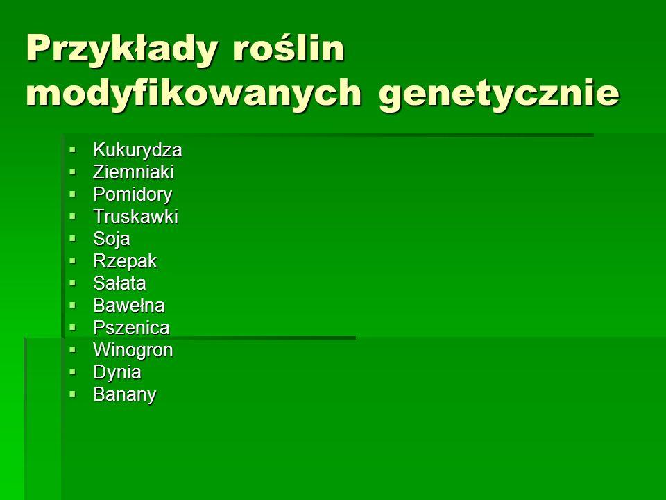 Przykłady roślin modyfikowanych genetycznie