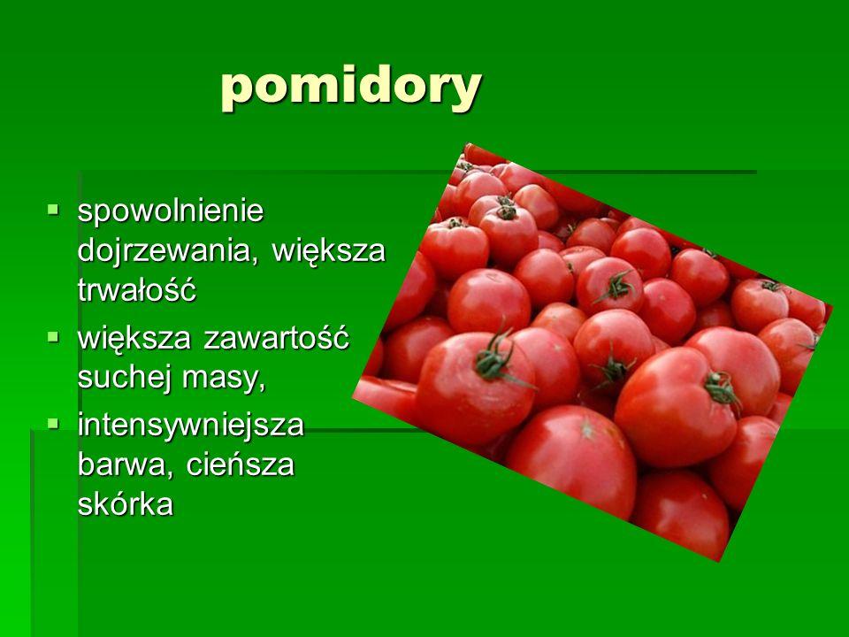 pomidory spowolnienie dojrzewania, większa trwałość