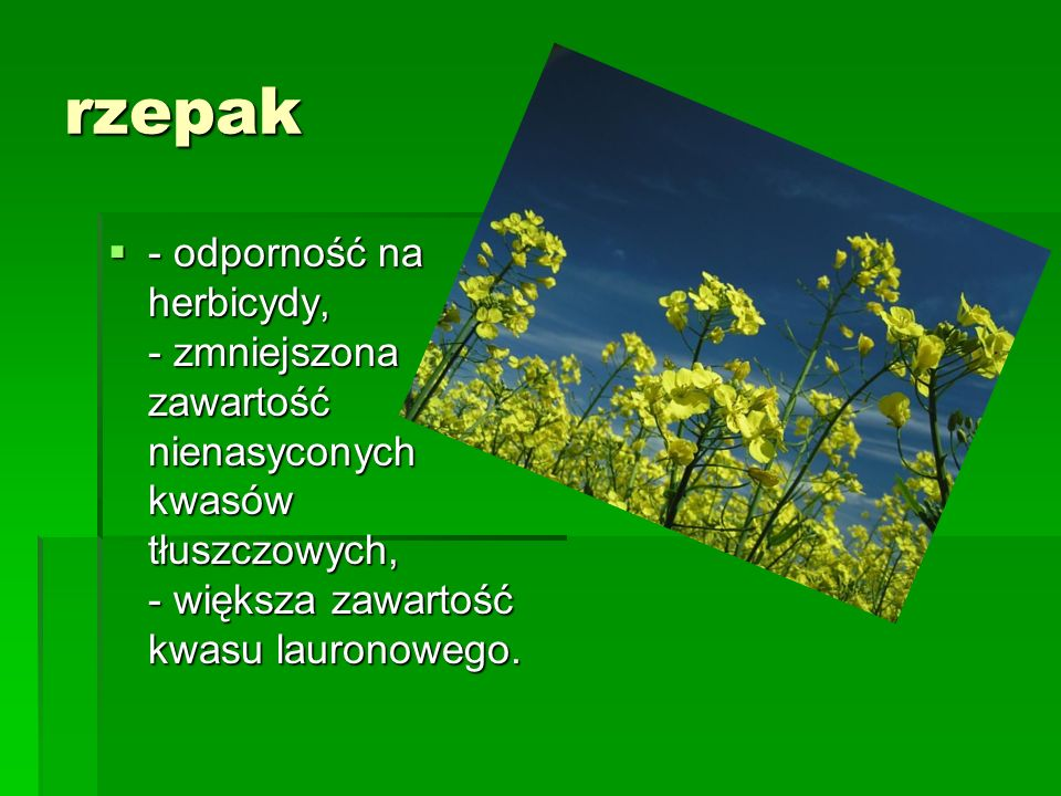 rzepak - odporność na herbicydy, - zmniejszona zawartość nienasyconych kwasów tłuszczowych, - większa zawartość kwasu lauronowego.