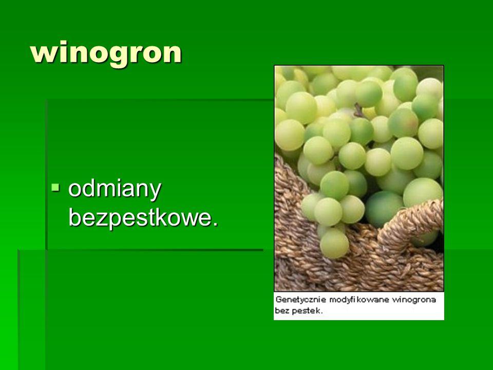 winogron odmiany bezpestkowe.