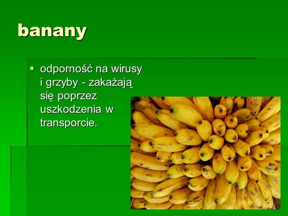 banany odporność na wirusy i grzyby - zakażają się poprzez uszkodzenia w transporcie.