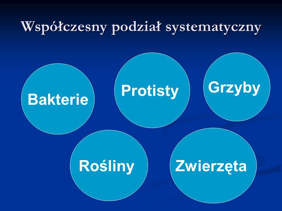 Współczesny podział systematyczny