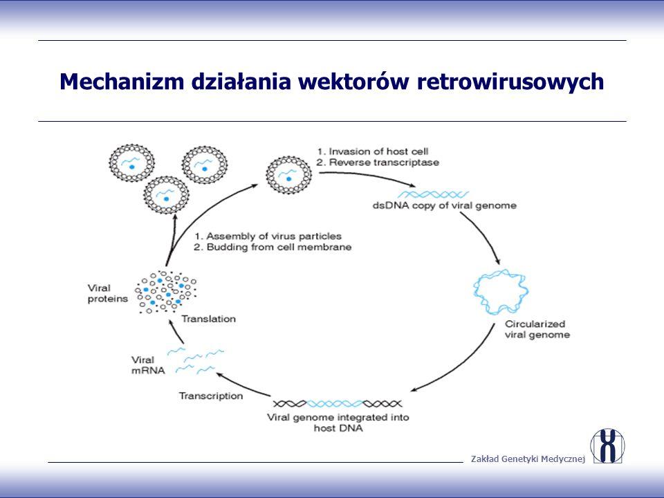 Mechanizm działania wektorów retrowirusowych