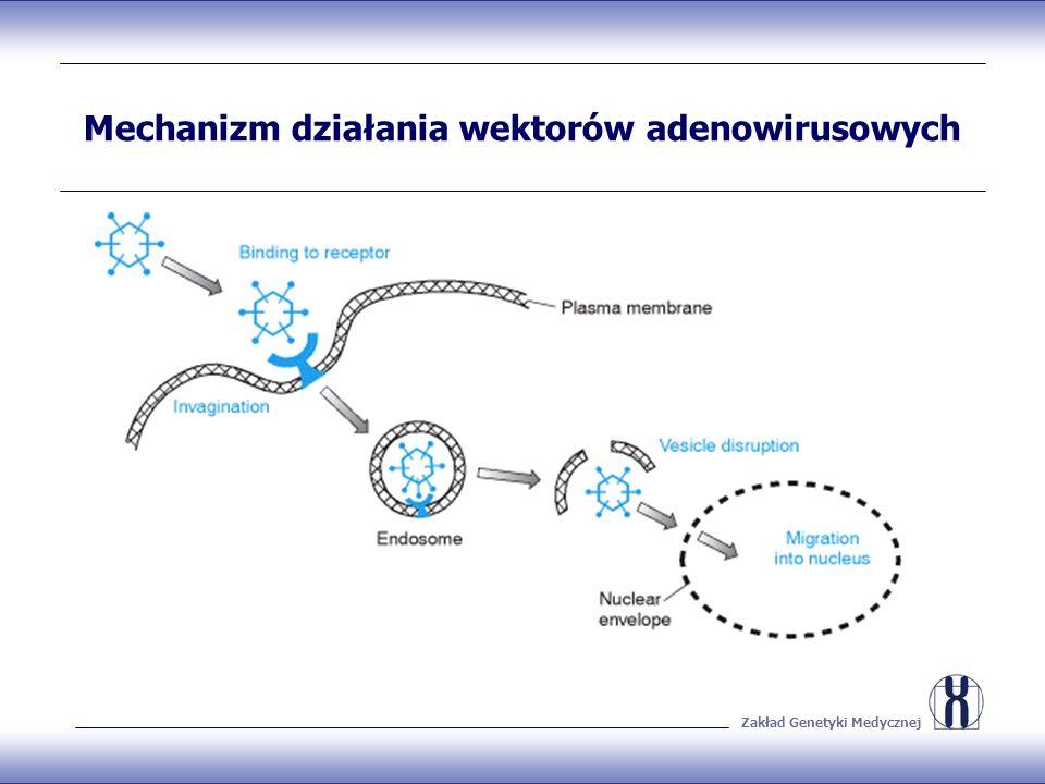 Mechanizm działania wektorów adenowirusowych