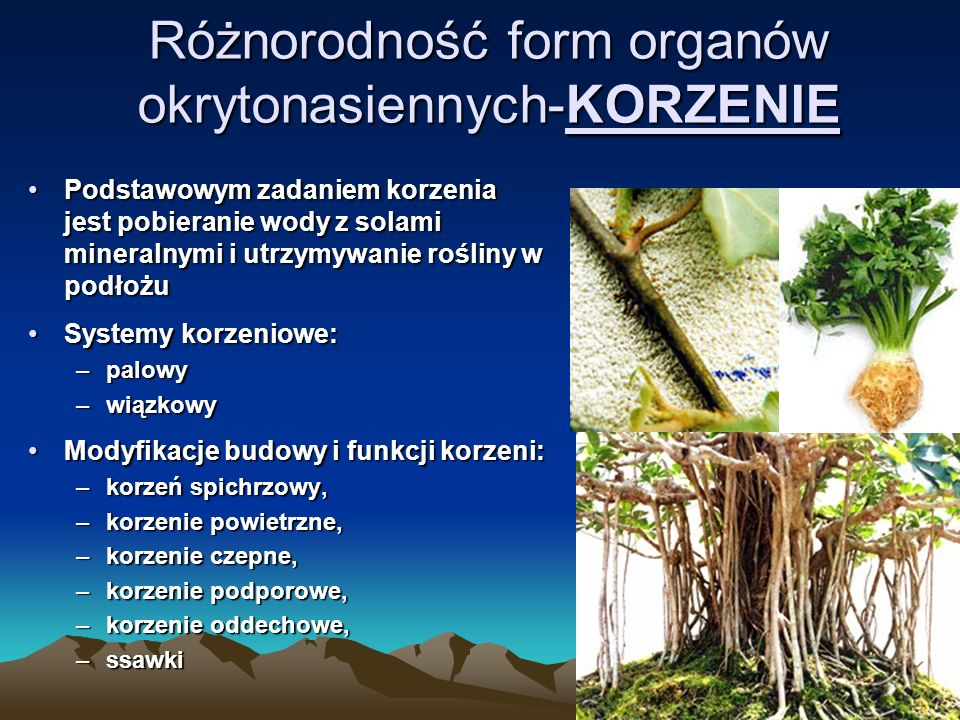 Różnorodność form organów okrytonasiennych-KORZENIE
