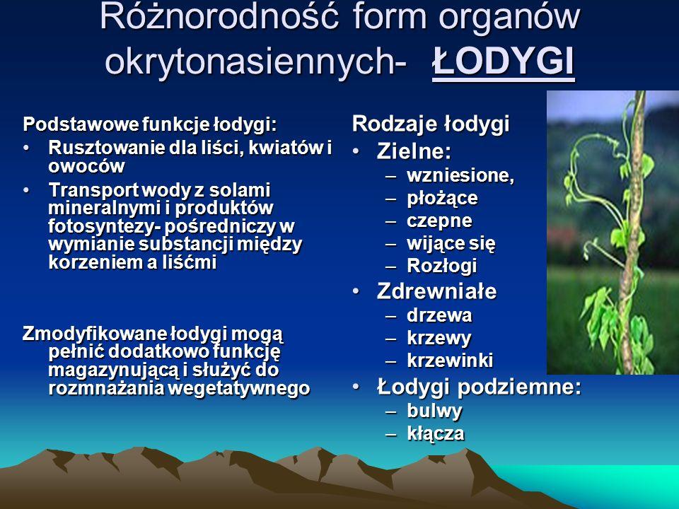 Różnorodność form organów okrytonasiennych- ŁODYGI