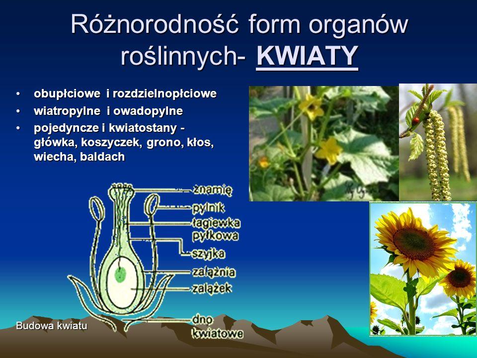 Różnorodność form organów roślinnych- KWIATY
