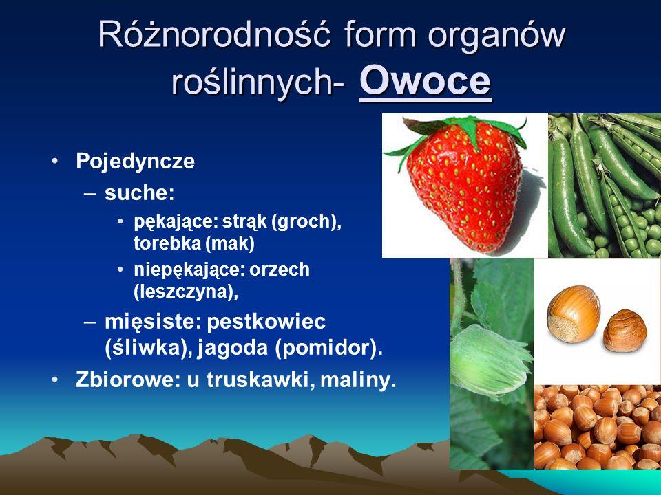 Różnorodność form organów roślinnych- Owoce