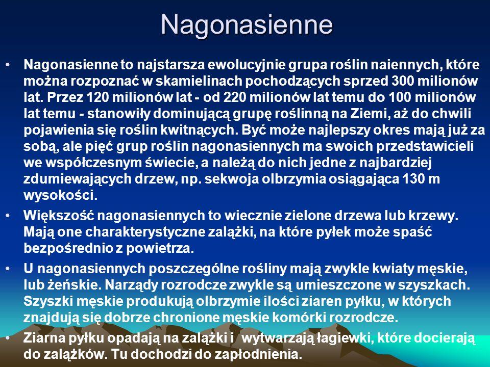 Nagonasienne