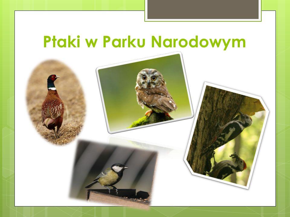 Ptaki w Parku Narodowym