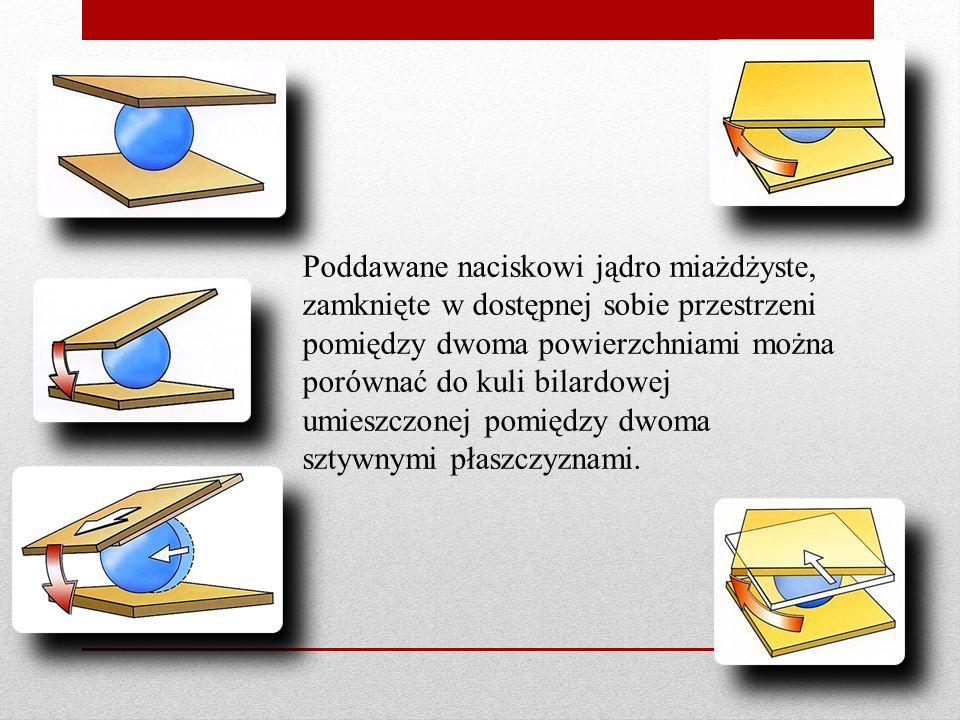 Poddawane naciskowi jądro miażdżyste, zamknięte w dostępnej sobie przestrzeni pomiędzy dwoma powierzchniami można porównać do kuli bilardowej umieszczonej pomiędzy dwoma sztywnymi płaszczyznami.