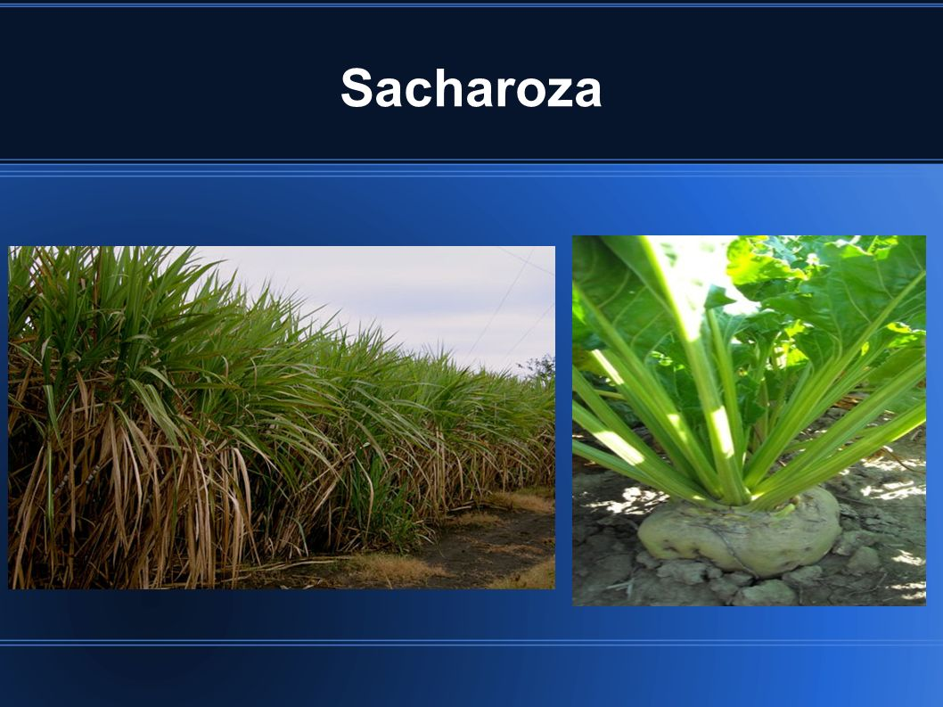 Sacharoza
