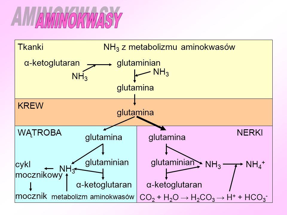 AMINOKWASY Tkanki NH3 z metabolizmu aminokwasów α-ketoglutaran