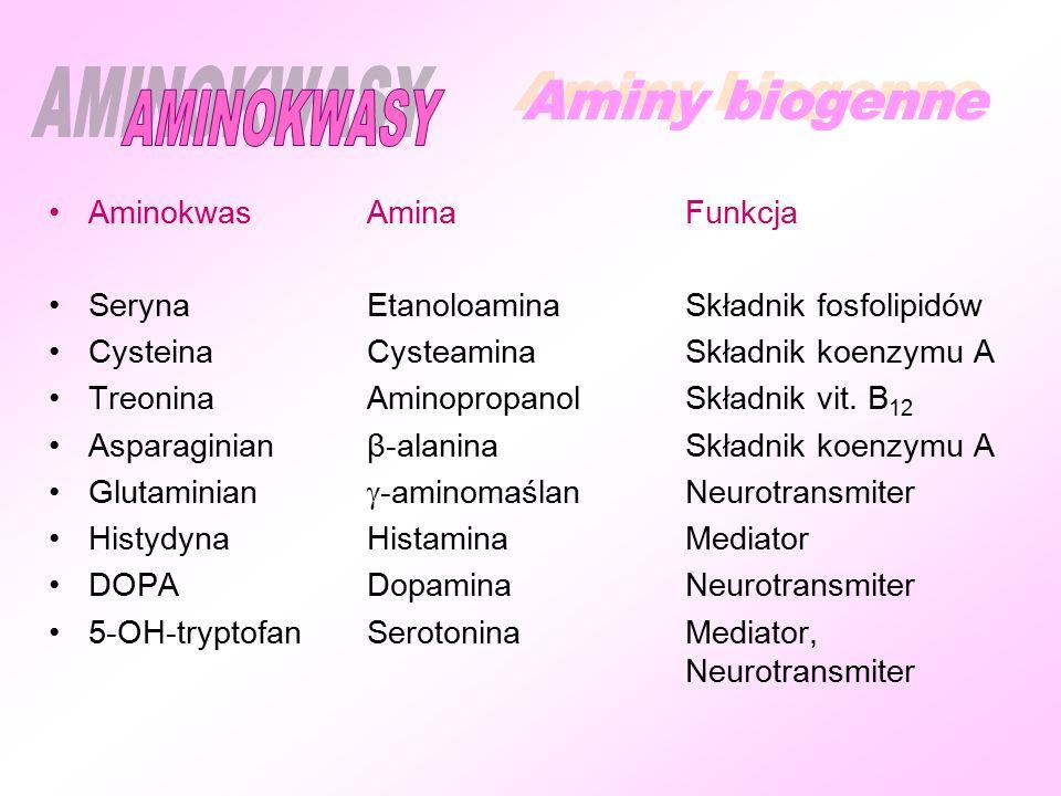 AMINOKWASY Aminy biogenne Aminokwas Amina Funkcja
