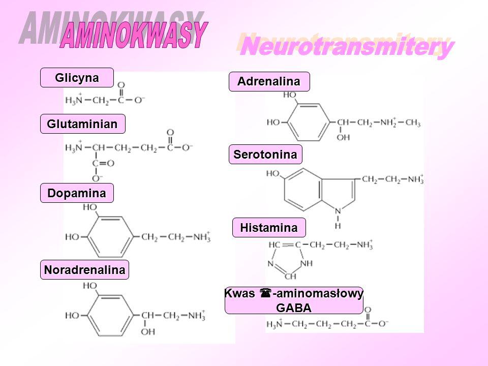 AMINOKWASY Neurotransmitery Glicyna Adrenalina Glutaminian Serotonina