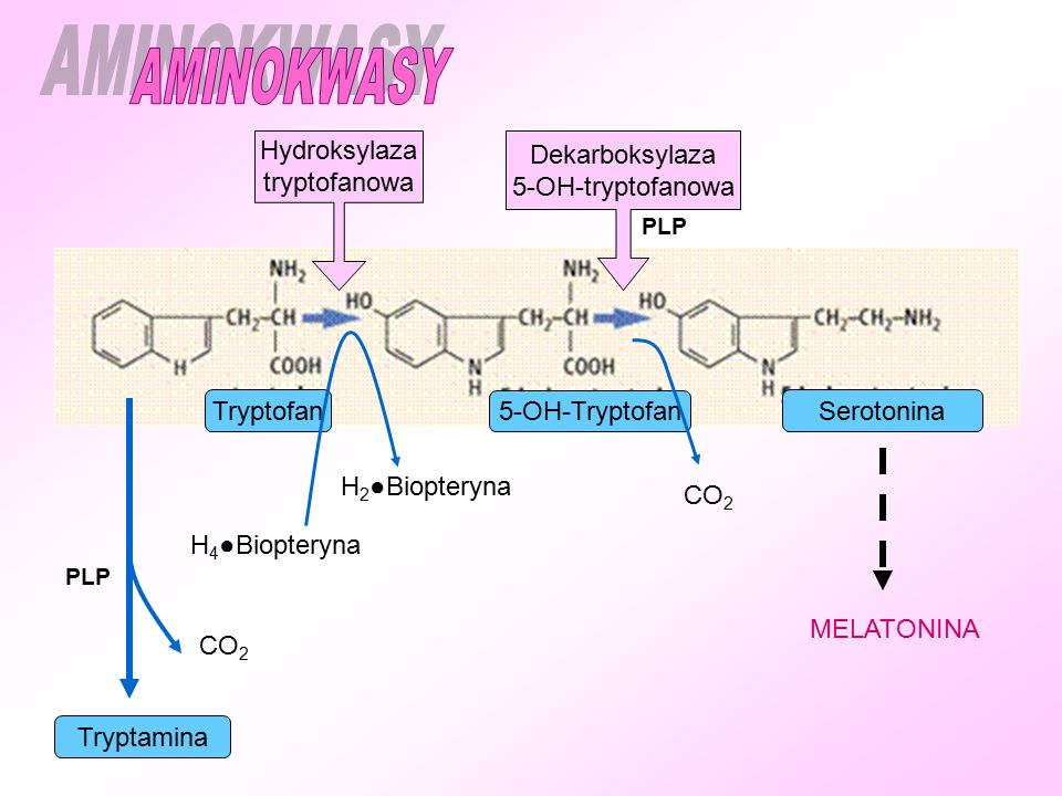 AMINOKWASY Hydroksylaza tryptofanowa Dekarboksylaza 5-OH-tryptofanowa