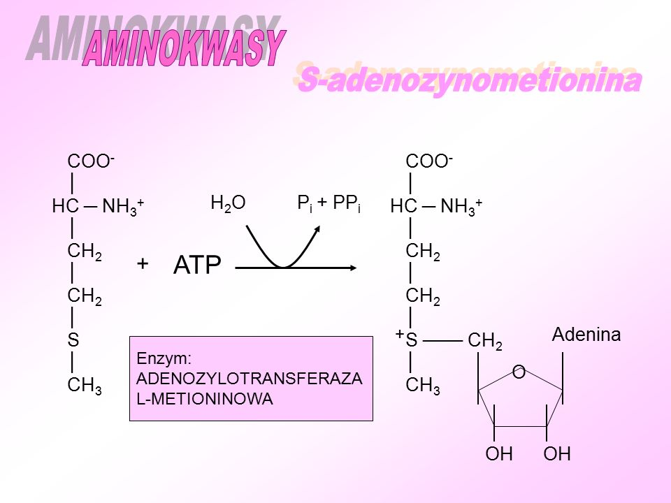 S-adenozynometionina