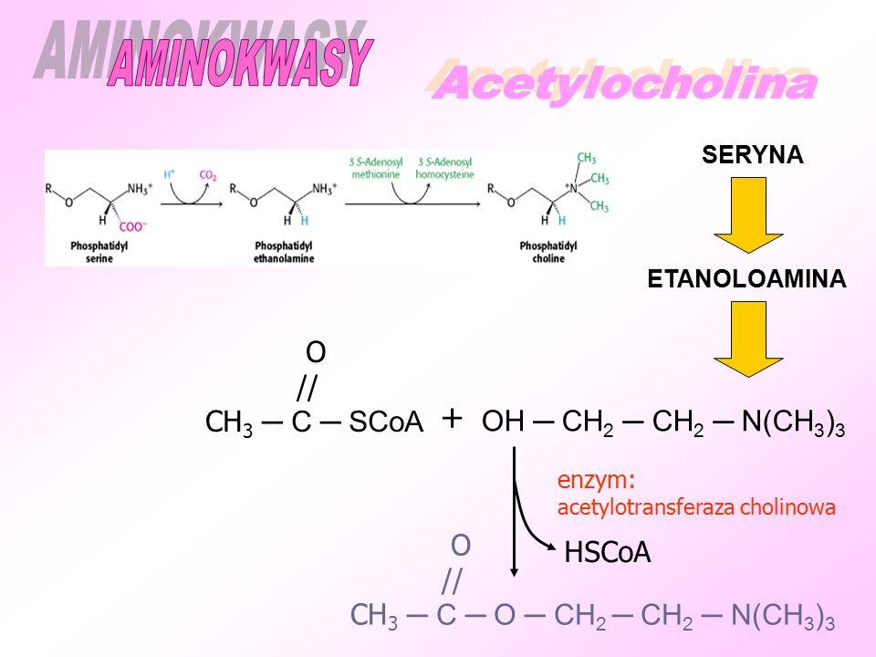 AMINOKWASY + Acetylocholina O // CH3 ─ C ─ SCoA