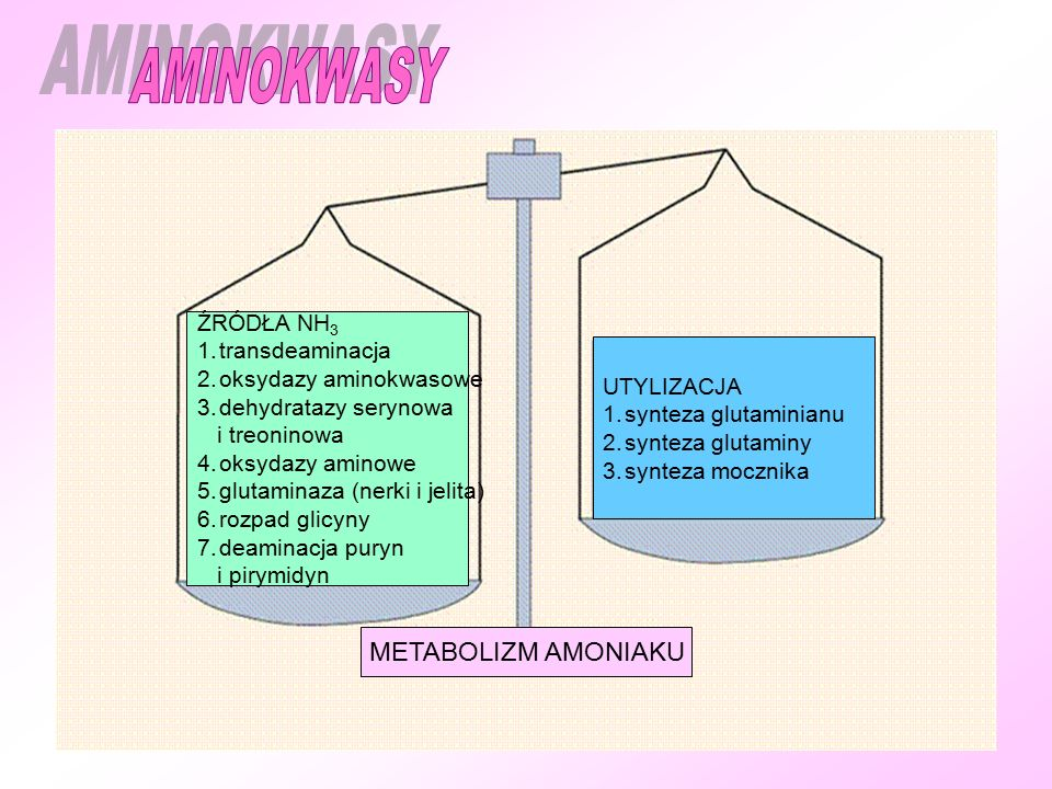 AMINOKWASY METABOLIZM AMONIAKU ŹRÓDŁA NH3 transdeaminacja