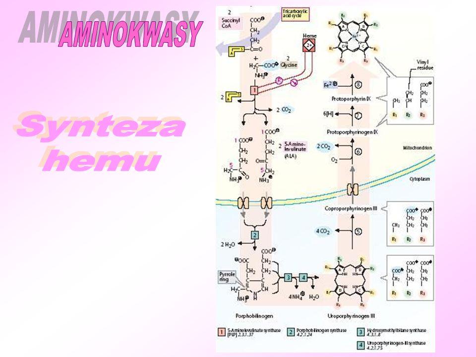 AMINOKWASY Synteza hemu