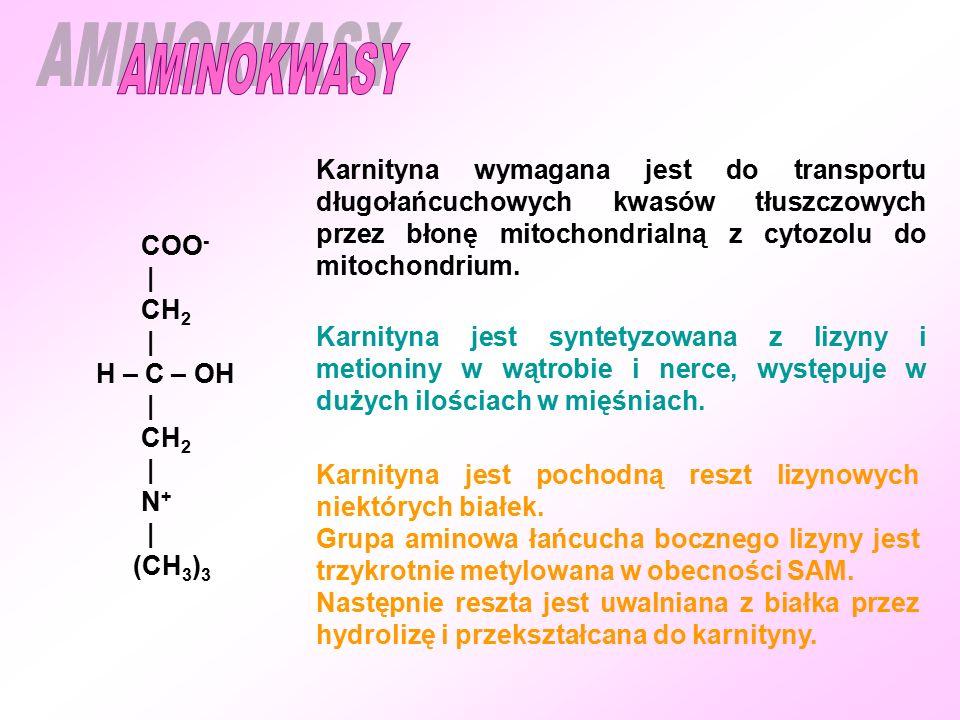 AMINOKWASY Karnityna wymagana jest do transportu długołańcuchowych kwasów tłuszczowych przez błonę mitochondrialną z cytozolu do mitochondrium.