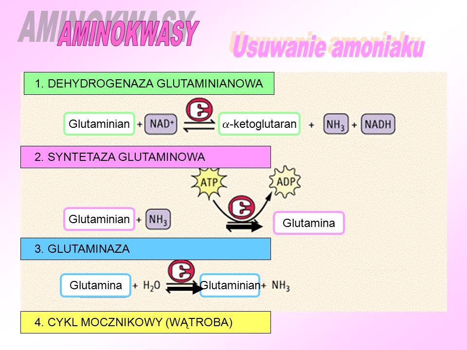 1. DEHYDROGENAZA GLUTAMINIANOWA