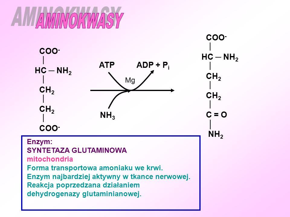 AMINOKWASY COO-  HC ─ NH2 COO-  CH2 HC ─ NH2 ATP ADP + Pi CH2 C = O