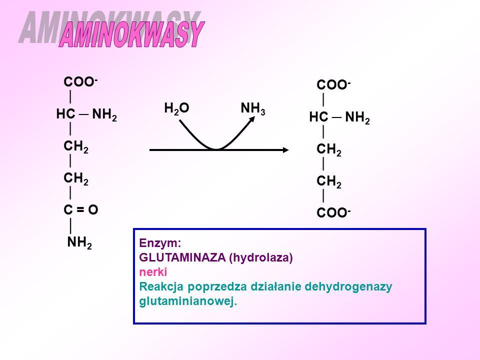 AMINOKWASY COO- COO-   HC ─ NH2 HC ─ NH2 H2O NH3 CH2 CH2 C = O │ NH2