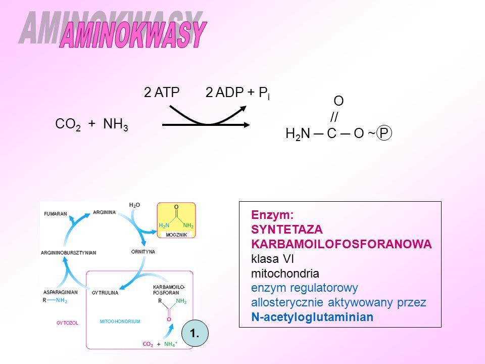 AMINOKWASY 2 ATP 2 ADP + Pi O // H2N ─ C ─ O ~ P CO2 + NH3 Enzym: