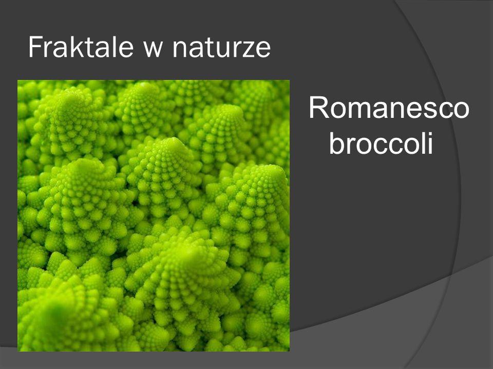Fraktale w naturze Romanesco broccoli
