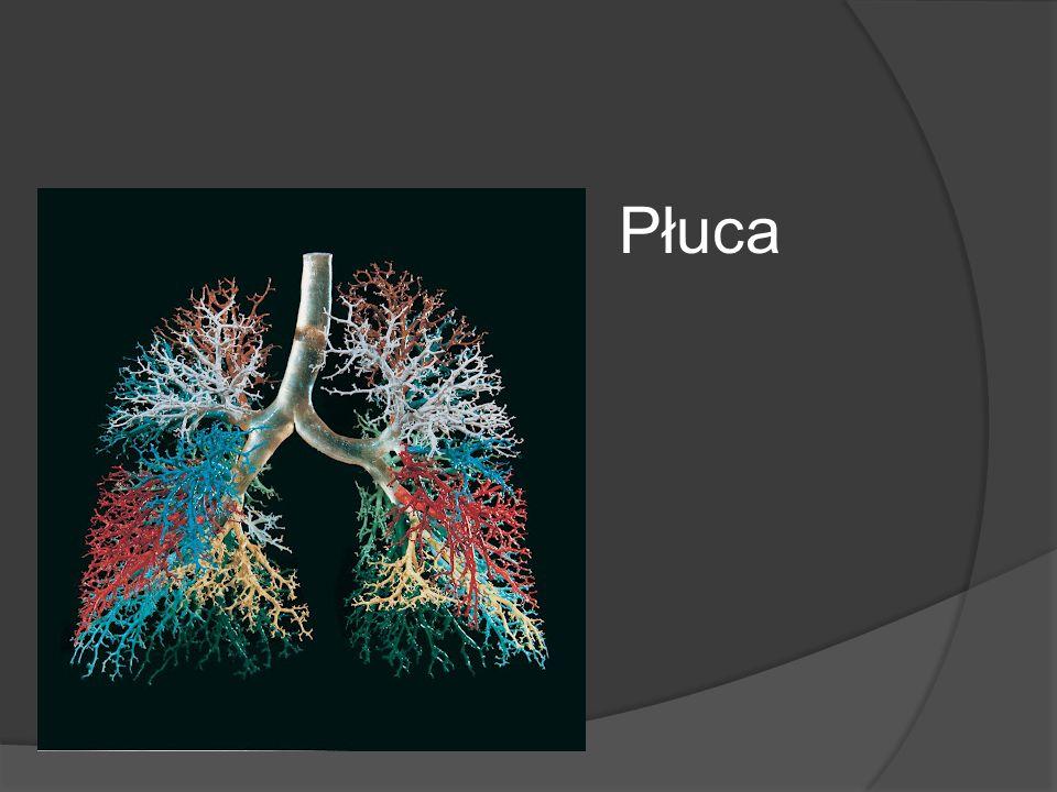 Płuca A nawet w swoim organizmie.