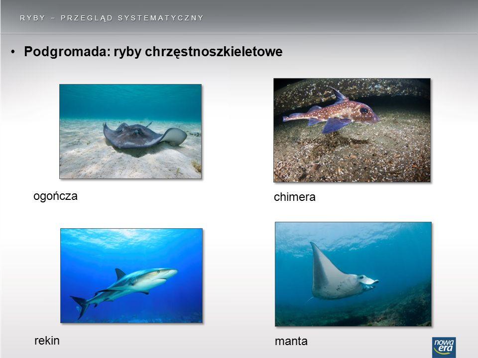 Podgromada: ryby chrzęstnoszkieletowe