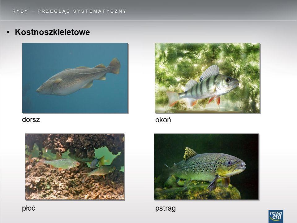 Ryby − przegląd systematyczny