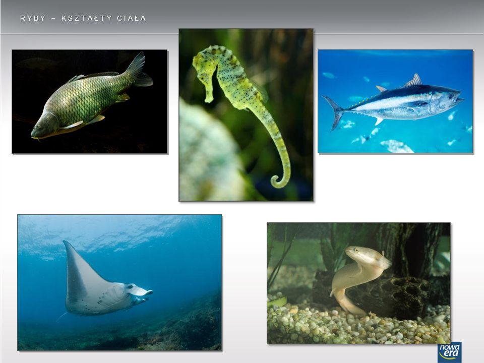 Ryby − kształty ciała