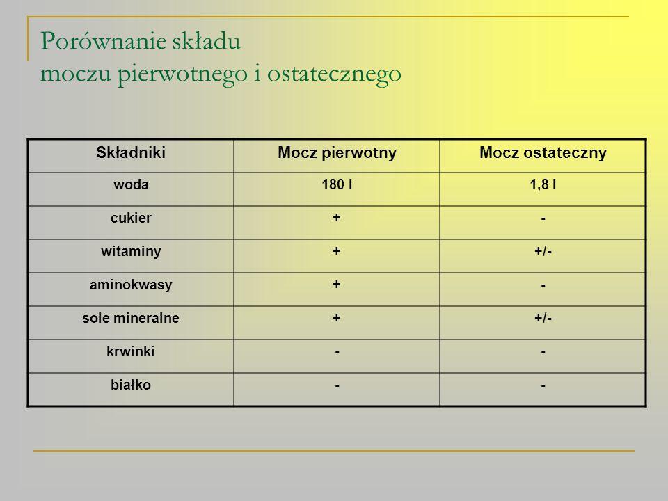 Porównanie składu moczu pierwotnego i ostatecznego