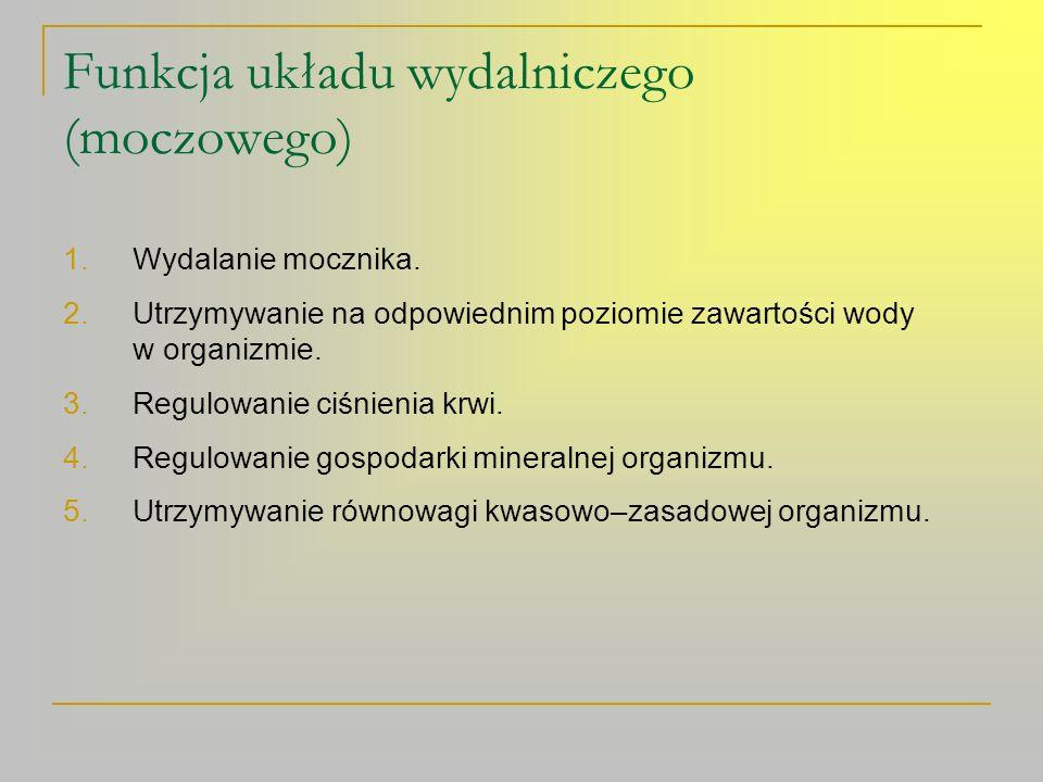 Funkcja układu wydalniczego (moczowego)