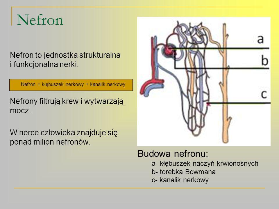 Nefron = kłębuszek nerkowy + kanalik nerkowy