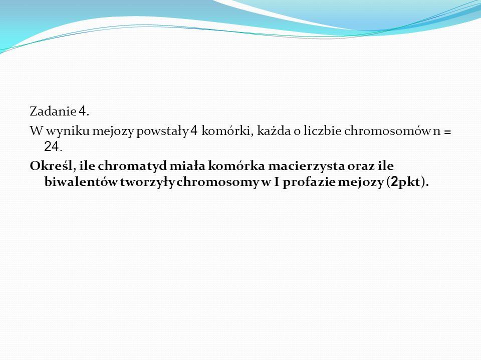 Zadanie 4. W wyniku mejozy powstały 4 komórki, każda o liczbie chromosomów n = 24.