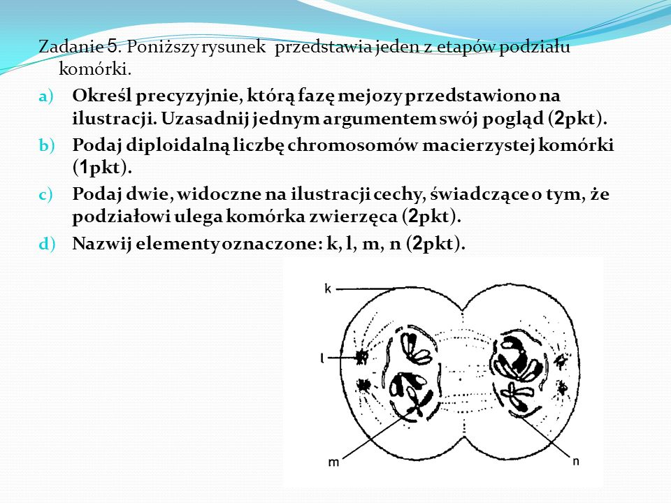 Zadanie 5. Poniższy rysunek przedstawia jeden z etapów podziału komórki.