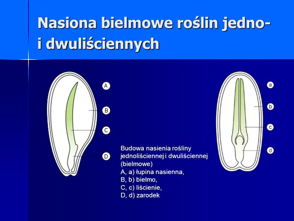 Nasiona bielmowe roślin jedno- i dwuliściennych